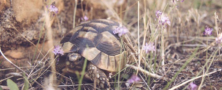 Śpiesz się powoli – czyli o cierpliwości w nauce języka obcego