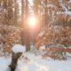 Skarby Zimy 2017: Heidi, Sekrety Drzew, Pietrucha i Kącik Hani