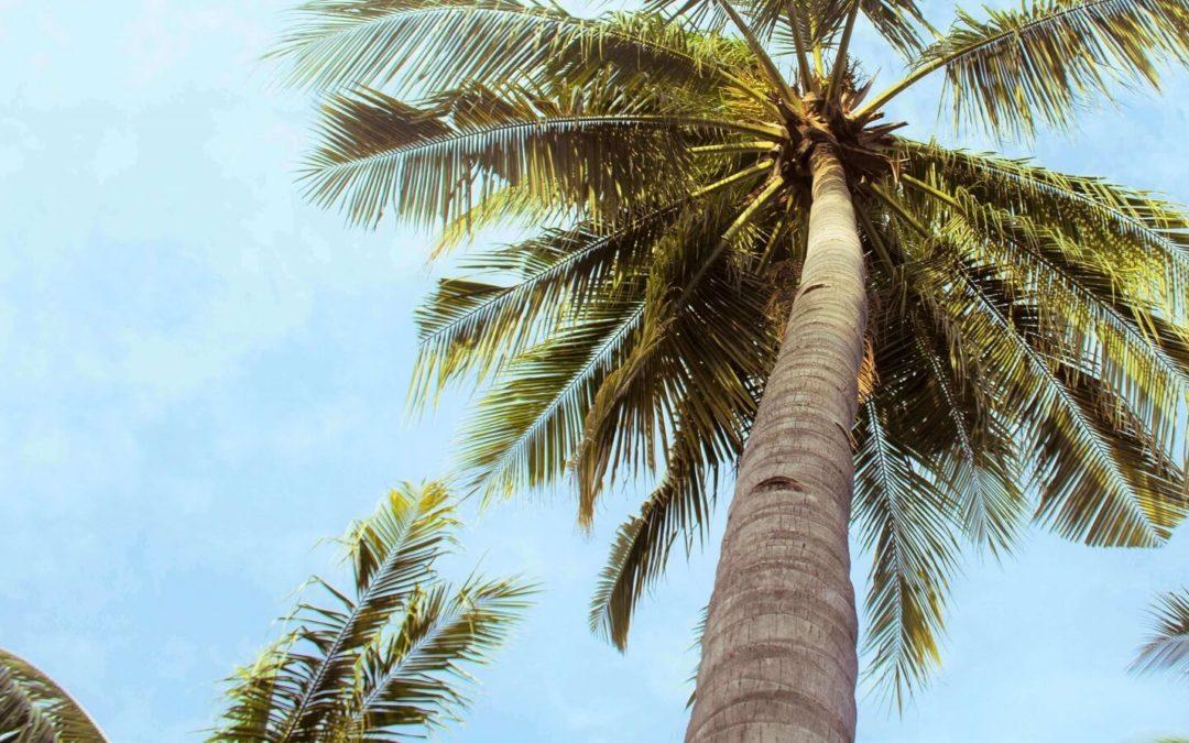 Rzuć wszystko i jedź w tropiki? Cyfrowy nomada inaczej.